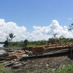 Solicitan moratoria de la explotación forestal maderable en la Amazonía