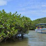 Advierten que manglares no resistirán aumento del nivel del mar
