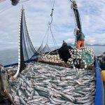 Exigen acciones contra la pesca excesiva