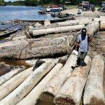 Loreto: Intervienen madera sin procedencia legal en las orillas del río Itaya