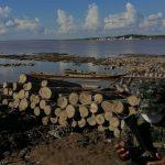 Inmovilizan producto forestal maderable en el río Ucayali