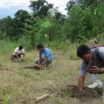 Madre de Dios: Impulsan recuperación de áreas afectadas por la minería