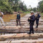 Ucayali: Intervienen 90 000 pies tablares de madera ilegal
