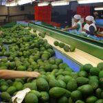 Agroexportaciones al alza