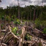 El Perú ocupa el quinto lugar en la deforestación de bosques primarios