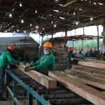 Empresas forestales listas para el reinicio de actividades