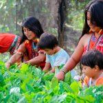 Conozca el «Bosque de Nuwas» en San Martín