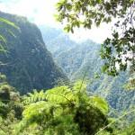bosques del Vrae constantemente amenazados