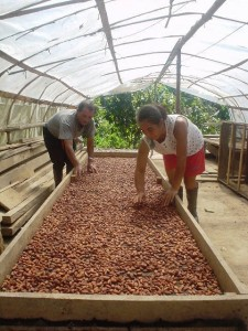Tocache produce hoy el mejor cacao del mundo