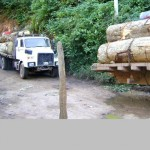 Se necesita un manejo integral contra tala de árboles